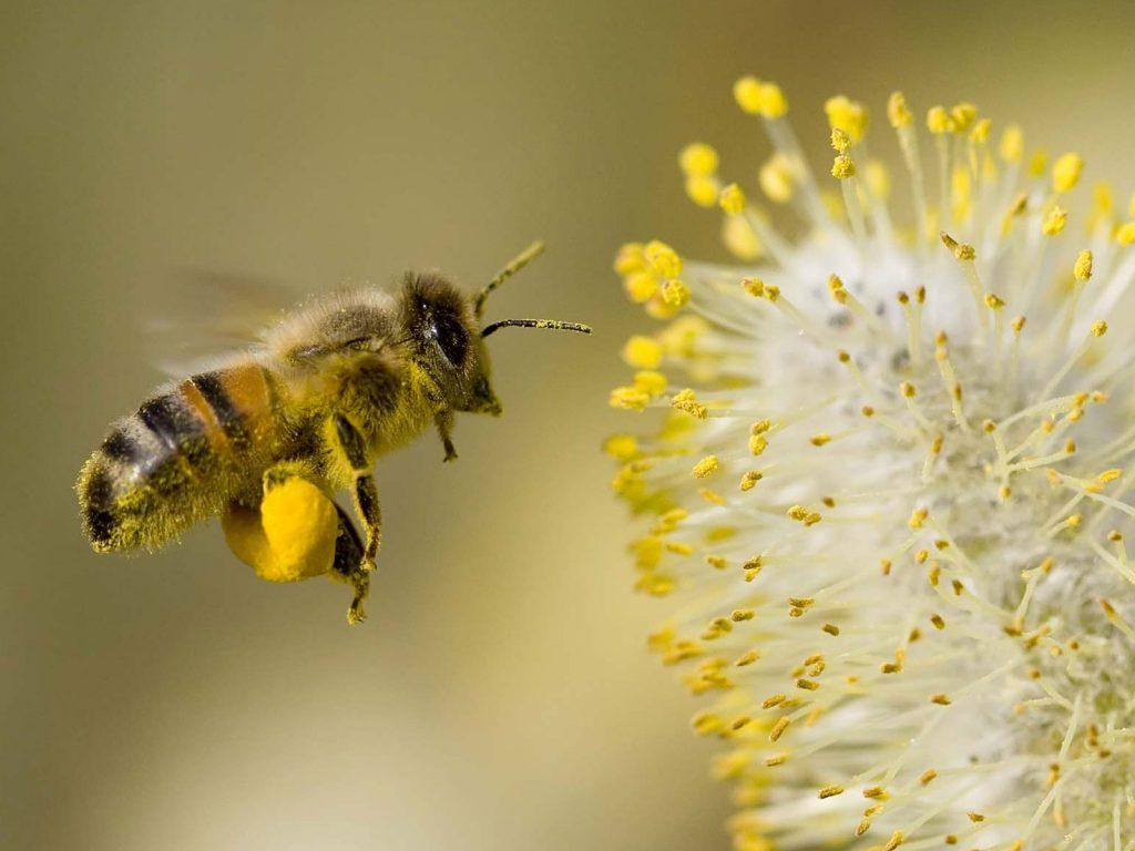 Brisa9-abelha