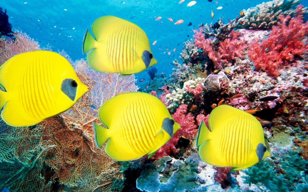 O Signo do Mar – ou Peixes